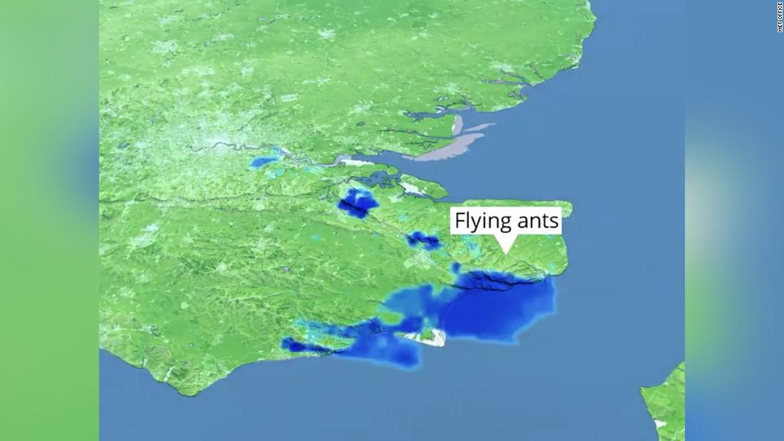 A 50-mile-wide swarm of flying ants looked like rain on UK weather radar