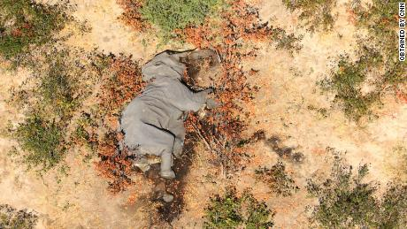"""Images obtained by CNN show many of the elephants lying """"flat on their faces."""""""