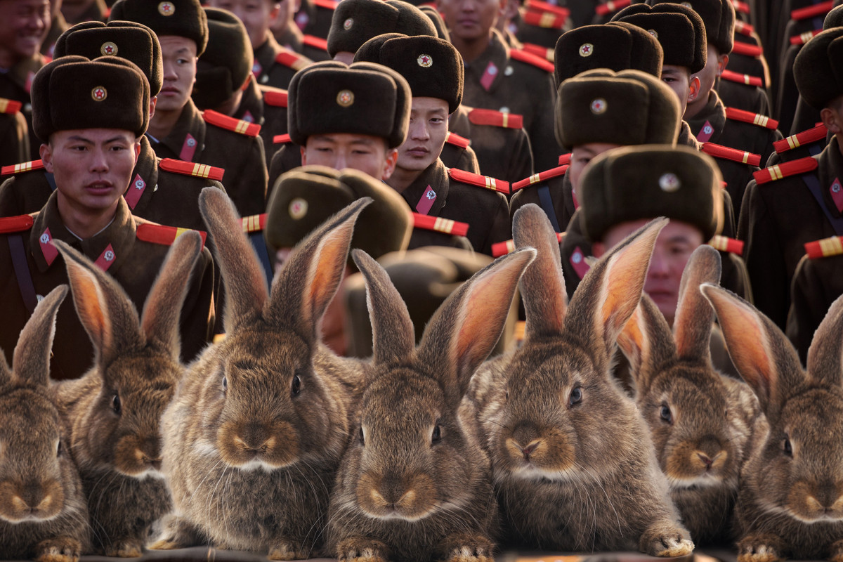 North Korean soldiers ordered to start breeding more bunnies