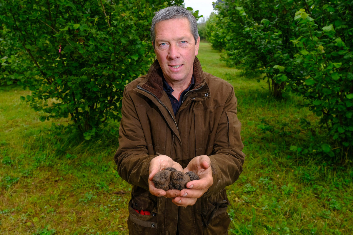 Truffle farmer forced to give away luxury crop to locals for free