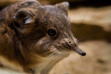 'Extinct' animal makes a comeback in not one, but two countries – BGR