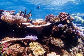 The first step in protecting the Great Barrier Reef is to understand what lives there