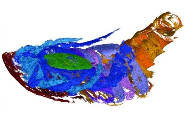 Extinct sea scorpions can breathe out of the water - Heritage Daily