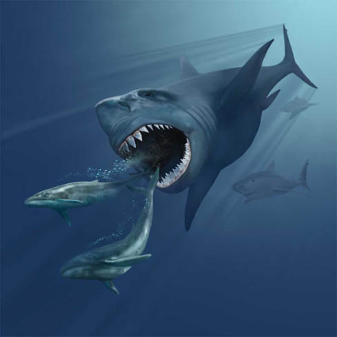 Artistic impression of a megalodon following two Ebalenoptera whales (Photo: Karen Carr)