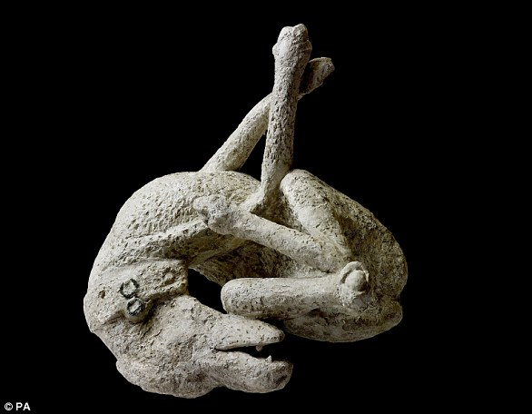 Plaster cast of a dog from the House of Orpheus in Pompeii, 79 AD.  About 30,000 people are believed to have died in the tragedy, and bodies are still found today