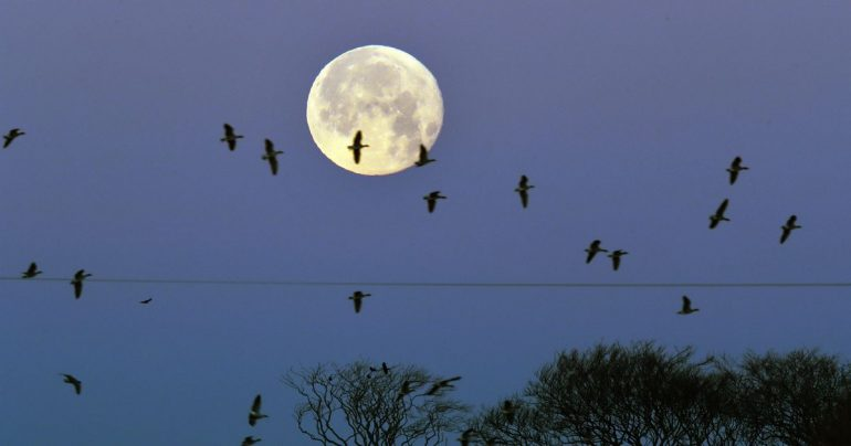 Rare 'Blue Moon' to appear on Halloween for the first time in two decades