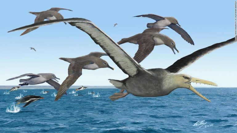 The study found that the Antarctic fossil could be the largest flying bird of all time