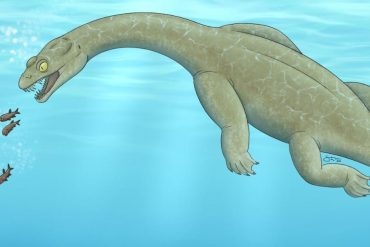 The newly discovered triassic lizard floats underwater to pick up prey