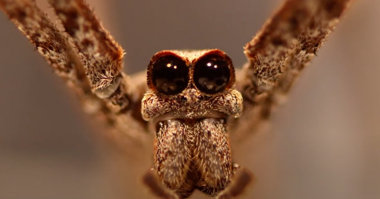 These spiders can hear with their feet