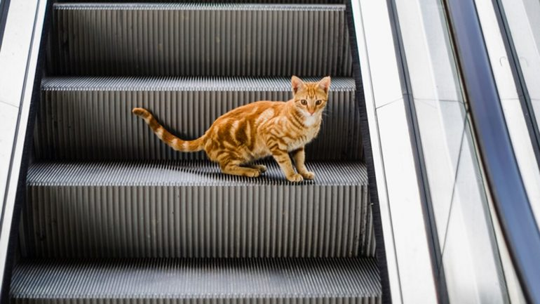 A cat clip going the wrong way from the escalator goes viral