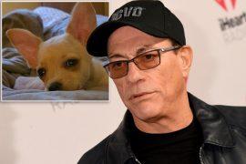 Jean-Claude van Dumme saves the dog's life after a passport dispute