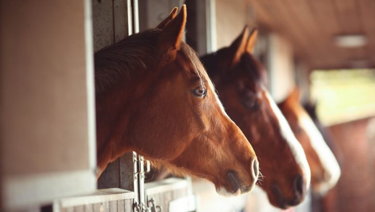 Stop feeding the horse as the manufacturer is looking for contamination