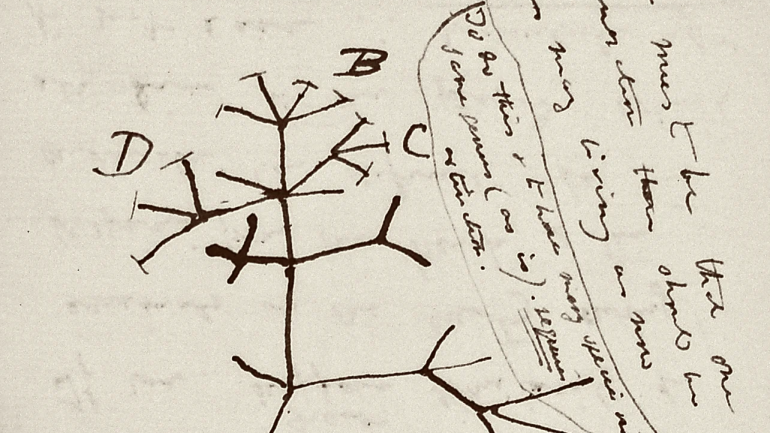 Darwin notebooks, invisible, now believed to have been stolen: NPR