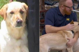 Pet Cloning: Man's Best Friend, Again