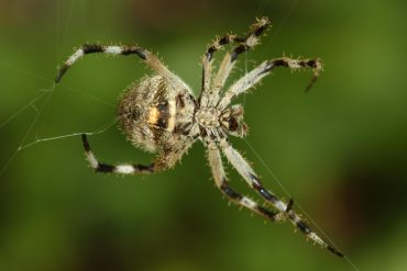 Spider silk is stronger than steel.  It adds itself.