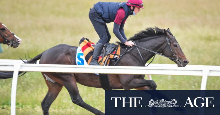 The coach's lack of hope will not defeat Tiger Moth in the Melbourne Cup