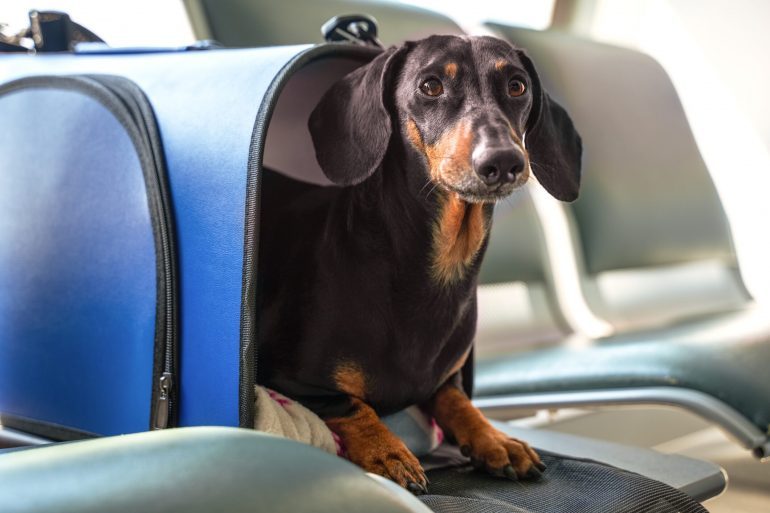 Animals with emotional support are no longer considered service animals on board, the DOT decides