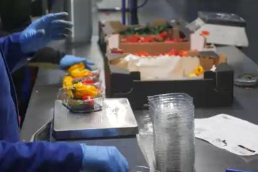 Fresh vegetables are processed ready to be shipped to the UK