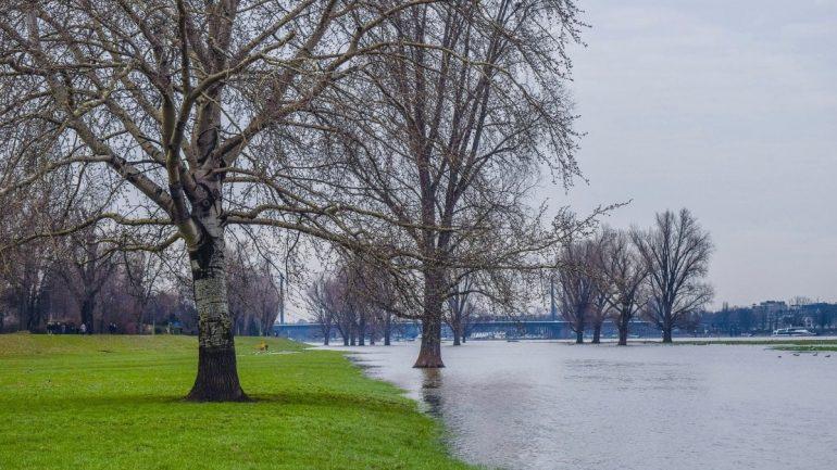 Green Ireland also needs trees