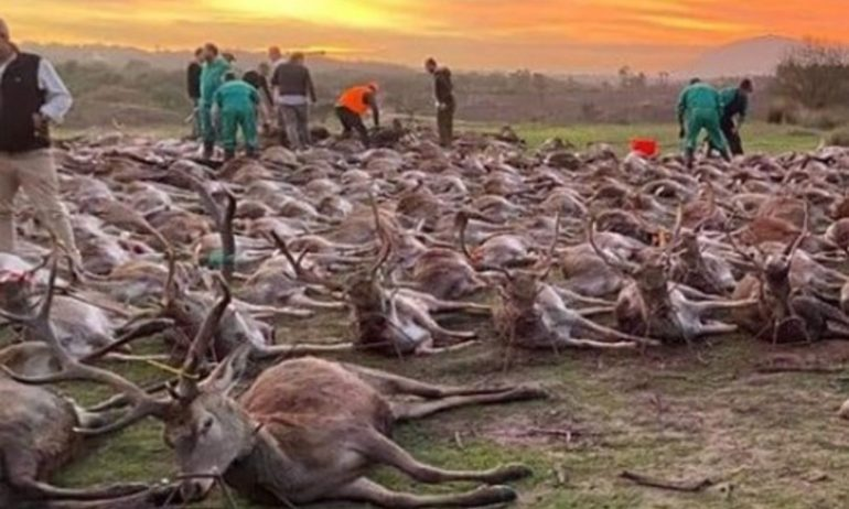 Spanish poachers kill 540 animals in Portugal, clashes between the two countries