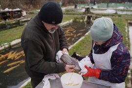 Success stories of sustainable aquaculture in Europe
