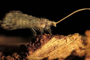 These insects kill six termites with a single toxin