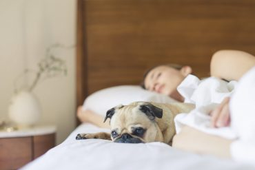 Can you sleep in bed with your dog?