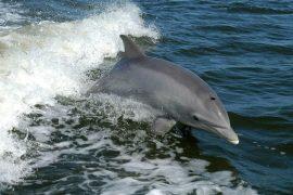"Ireland suspects Putin of missing dolphin ""mascot"""