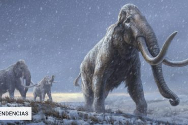 They recover the world's oldest DNA from the remains of mammoths more than a million years old |  Technology