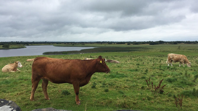 Ireland, Irish Grassfed Beef begin procedures to register as a PGI