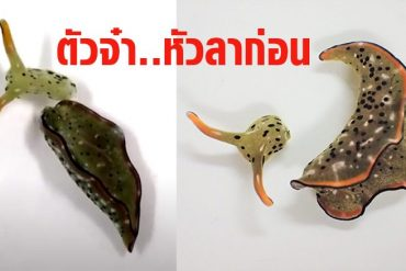 Head split!  Stunned, the sea slag cut itself off.  Create a new heart to eliminate parasites