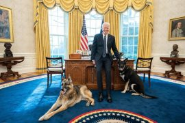 Biden's dog causes minor injury to White House agent    The world