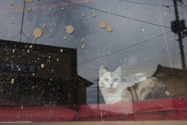 Caring for Fukushima cats