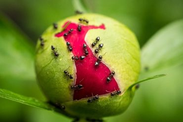 Central University studies show that ants prevent pollination in pumpkin seeds  study shows that ants prevent pollination