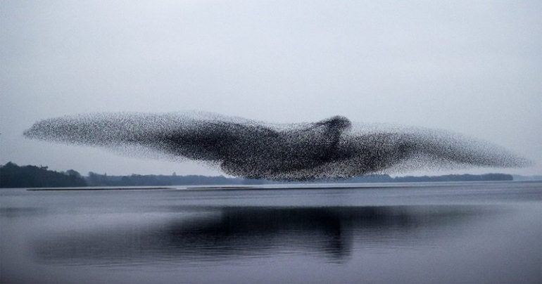 During the dancing murmur, these stars seem to recreate a giant bird.