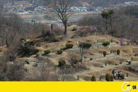 이젠, 무덤이 따뜻하게 느껴져요…희귀식물 '마지막 피난처'
