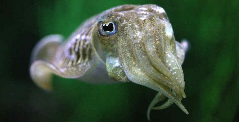 Mattress fish know how to use self-control