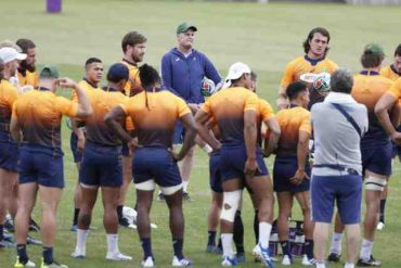 Springbox to start training camps for the Lions Tour
