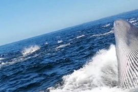 The man was thrown into the sea after a whale hit a tourist boat