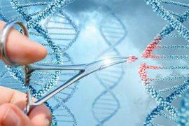 Updated CRISPR-Cas9