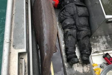 109 kg 'River Monster' fishing in the USA;  Fish can be over 100 years old  The world