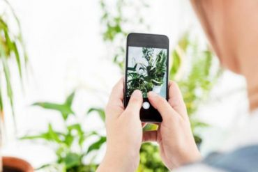 Applications for plant lovers |  Cuo's Diary
