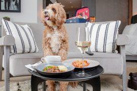 Hilton lança cardápio para pets