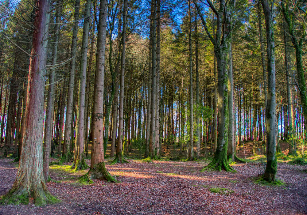 Forests and baths to bathe the forests of Ireland