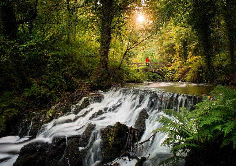 6 trees and forests in Ireland to revitalize the forest