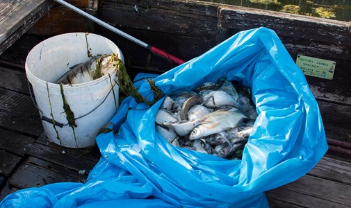 """""""I was told there was an SOS situation"""" - This is not the only fish extinction in Lake Venice"""