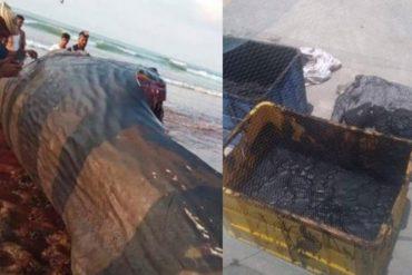 Fortunately!  Fishermen find $ 7 million in treasure inside animal world