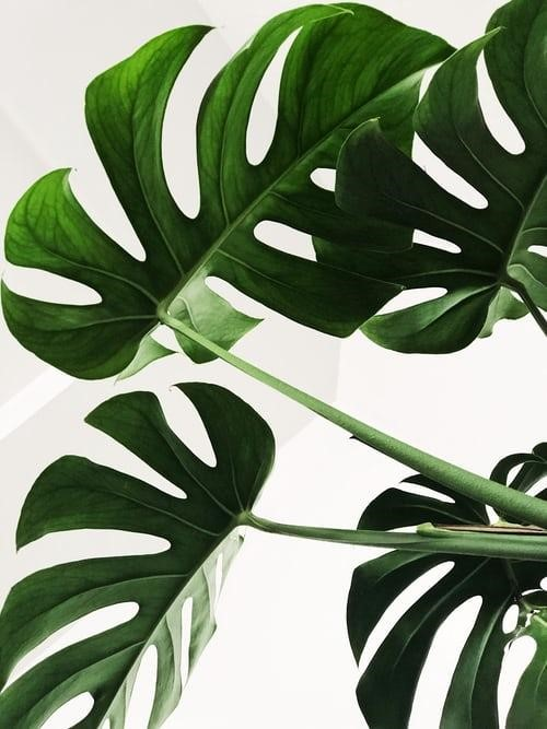 Plants a Newbie Can Care For