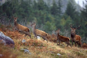 Sounds of Nature, new video presents the sounds of nature in Ireland