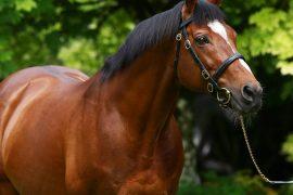 Horseback riding: Gallio is dead - the most valuable stallion ever
